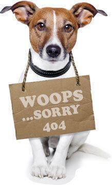 404-dog